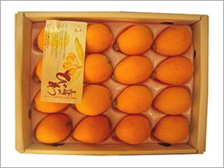 茂木びわ 2Lサイズ 16個入り 長崎産