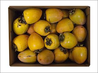 枝つき愛宕柿(干し柿用・しぶ柿) 2Lサイズ 10kg入り(40〜44個) 徳島産