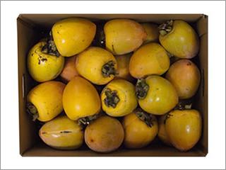 枝つき愛宕柿(干し柿用・しぶ柿) Lサイズ 10kg入り(46〜50個) 徳島産
