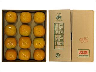 たねなし柿 4Lサイズ 24個入り(12個×2段) 和歌山産